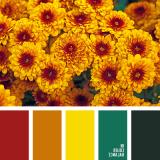 sochetanie-oranzhevogo-085