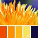 sochetanie-oranzhevogo-411