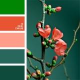 sochetanie-zelenogo-044