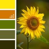 sochetanie-zelenogo-058
