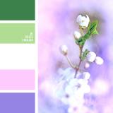 sochetanie-zelenogo-101