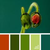 sochetanie-zelenogo-136