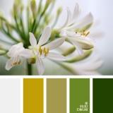 sochetanie-zelenogo-160