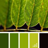 sochetanie-zelenogo-248