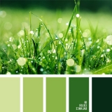 sochetanie-zelenogo-297