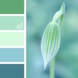 sochetanie-zelenogo-356