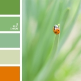sochetanie-zelenogo-362