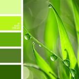 sochetanie-zelenogo-525