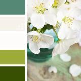 sochetanie-zelenogo-526