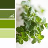 sochetanie-zelenogo-550