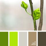 sochetanie-zelenogo-554