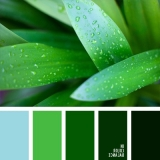 sochetanie-zelenogo-569