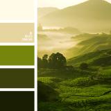 sochetanie-zelenogo-570