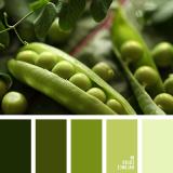 sochetanie-zelenogo-581