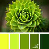 sochetanie-zelenogo-619