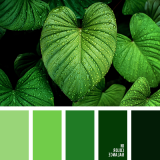 sochetanie-zelenogo-660