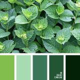 sochetanie-zelenogo-680