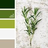 sochetanie-zelenogo-692