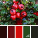 sochetanie-zelenogo-695