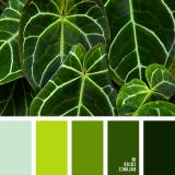 sochetanie-zelenogo-731