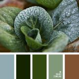 sochetanie-zelenogo-734