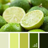 sochetanie-zelenogo-768