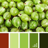 sochetanie-zelenogo-786