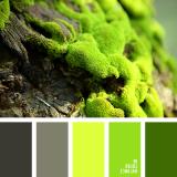 sochetanie-zelenogo-794