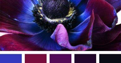 цветовая палитра сочетания синего цвета с другими