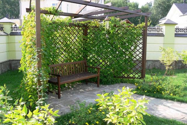беседка-пергола с растениями